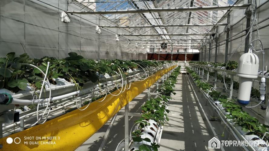 Topraksız Tarım Serası Projesi